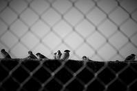 冬 雀 - フォトな日々
