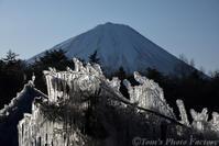 西湖野鳥の森公園~氷の祭典「樹氷まつり」 - Tomの一人旅~気のむくまま、足のむくまま~
