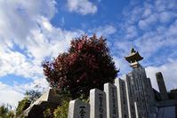 59番札所 国分寺④ - G-SHOT photo by MR.G