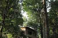 コロンボ  木立の中の家 - スクンビット総合研究所 - Sukhumvit Research Institute
