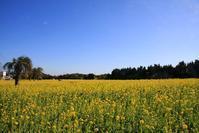 春の黄色 - ぶん屋の抽斗