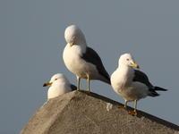 海の観察会 その3 - 自然がいっぱい3