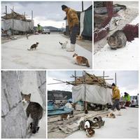 真鍋島の猫たち - ちょこちょこ4