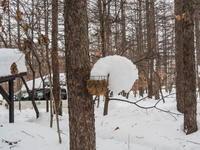 """カンタベリーの「雪まつり」?メイン雪像は""""りすのしっぽ""""? - 十勝・中札内村「森の中の日記」~café&宿カンタベリー~"""