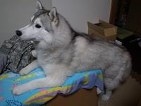 おまかせちゃん♪ (^o^) - 犬連れへんろ*二人と一匹のはなし*