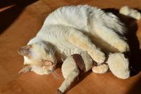 寝猫17 - オムイと森羅万象