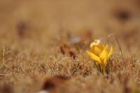 春は黄色 - akiy's  photo