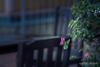 ☆ ブーゲンビリア ☆ - Trimming