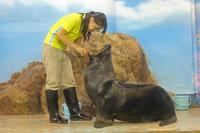 しながわ水族館~ご長寿オタリア「クッキー」さんとアザラシ館 - 続々・動物園ありマス。