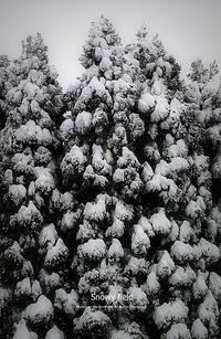 Snowy field VIII - Illusion on the Borderline  II @へなちょこ魔術師