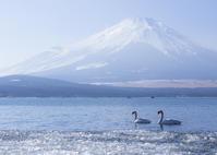 白鳥の湖 - ほほえみ