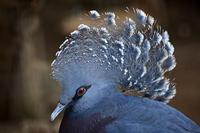江戸川区自然動物園の鳥たち - 動物園放浪記