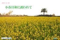 2017-1-28-小春日和に誘われて - 日本全国くるま旅