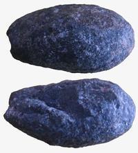 和泉層群の化石たち(2)…巻貝(2) - ふぉっしるもしてみむとてするなり