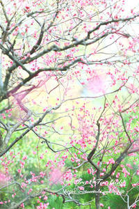 梅香る - 色音あそび