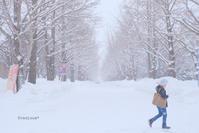 北大雪散歩。 - Precious*恋するカメラ