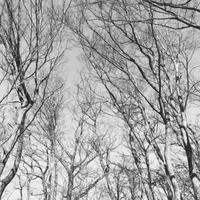 #206 Monochrome winter forest モノクロの冬の森(写真部門) - THIS MOMENT