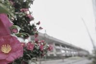 言わぬが花   (自由部門) - 「美は観る者の眼の中にある」