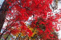 京都の紅葉2016 修学院離宮(下離宮編)(写真部門) - 花景色-K.W.C. PhotoBlog