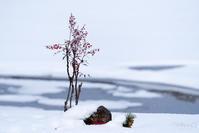 雪の広沢池 -2- - ◆Akira's Candid Photography