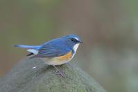 冬の色鳥どり - 子連れバーダーの日々 BLOG