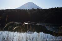 富士を眺める旅~精進湖から本栖湖へ - Tomの一人旅~気のむくまま、足のむくまま~