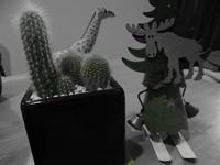cactus - kawamax