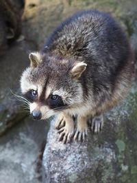 1月30日(月) リズム - ほのぼの動物写真日記