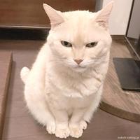 こころもとないかお - 賃貸ネコ暮らし|賃貸住宅でネコを室内飼いする工夫