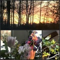 夕焼けと朝焼け - 森の扉