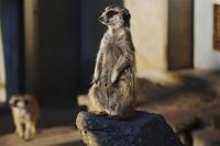 市川市動植物園で、150-600mmF5-6.3DGをちょこっと。 - しゃしん三昧   ~シグマ、レクサス、着物の日々~