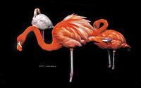flamingo つづき(写真部門) - A  B  C
