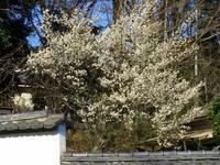 春の陽気 - 気ままな日記