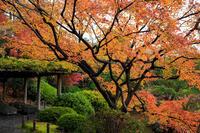 京都の紅葉2016 紅葉の城南宮 - 花景色-K.W.C. PhotoBlog