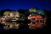 六義園 紅葉ライトアップ - 花景色-K.W.C. PhotoBlog