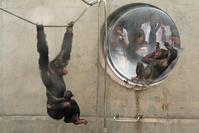 旭山動物園との出会い 人生を変える1枚 - 動物園のど!