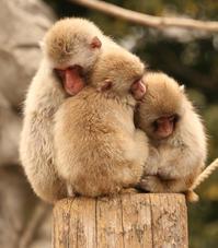 上野動物園で初心を取り戻す おひとりさま動物園 - 動物園のど!