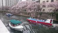 目黒川のお花見クルーズ、予約は2月1日から - 新 LANILANIな日々
