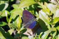 大寒でも - 蝶と蜻蛉の撮影日記