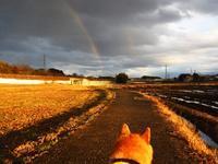夕方の虹 - マルちゃん日記