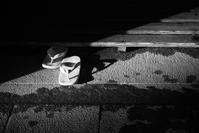 #DP3M #bw 陰影 #北野天満宮 (写真部門) - 関西ウォーカー自遊人 Trial
