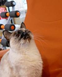 芙蓉亭の餃子 - オール電化生活!カノンとキアと猫ちゃんと愉快な仲間