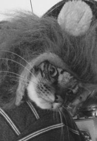 宇宙との交信!トラちゃんの2月占い&地震体感と検証。 - 猫丸ねずみの大荒れトーク