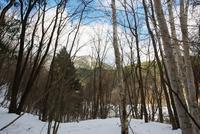 1月31日 寒さが戻ってきた - 日々GILIGILI