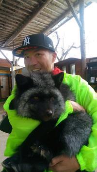 東北シリーズ2 FOXです。 - くまくまどんどこ