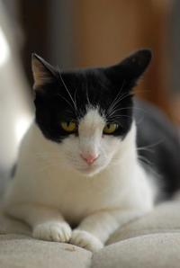 ナツ - Black Cat Moan