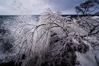 しぶき氷 - PHOTOLOG