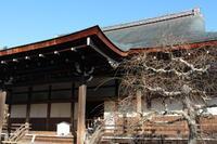 京都・天龍寺 - 猪こっと猛進