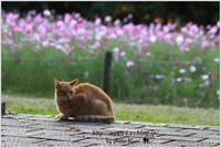 今日の外猫さん「動物・ペット部門」 - 4にゃん日記+