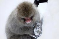 サル、です。 - Taro's Photo